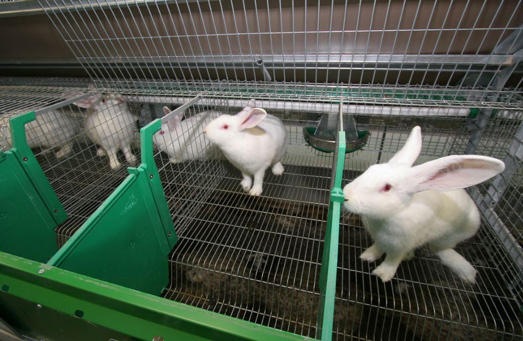 Al Consumidor Le Da Pereza Comprar Carne De Conejo Porque Desconoce Los Nuevos Formatos De Presentación