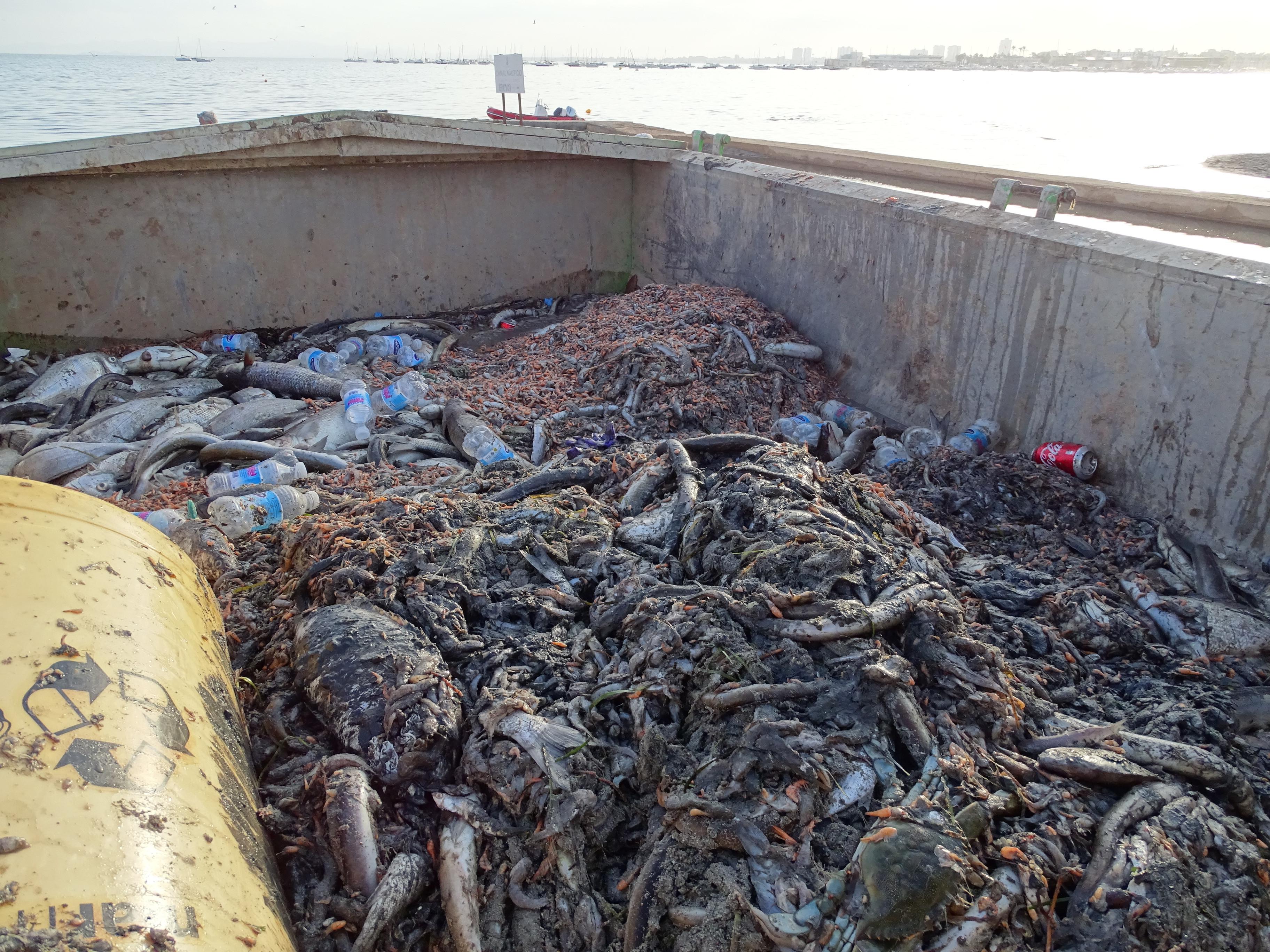 Subvención de 400.000 euros para los pescadores de la Cofradía de San Pedro del Pinatar - Agrodiario
