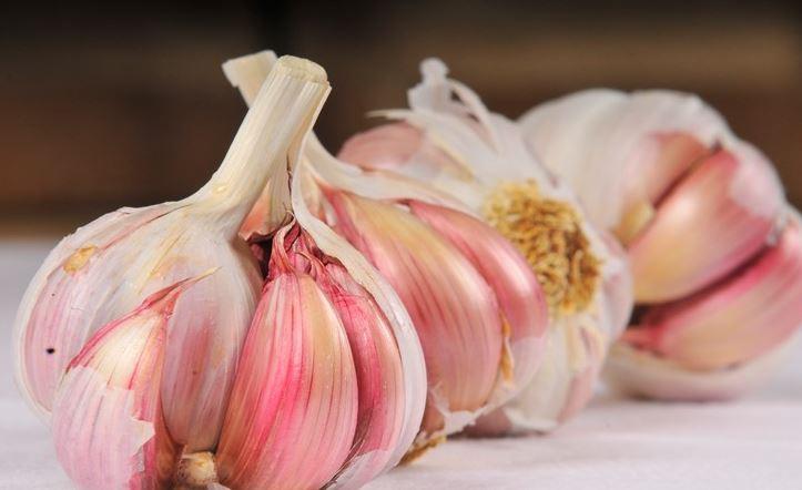 GarlicMicroWaterPillsPhotograpajomomadad 1