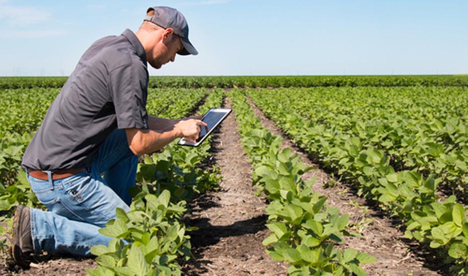 Casi un 70% de agricultores se ve innovador pero la mitad no prueba la  tecnología en sus cultivos
