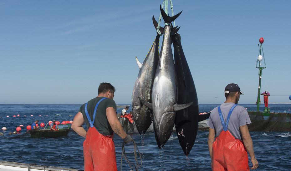 """Planas: """"Solo desde la sostenibilidad podremos asegurar el futuro de  nuestros pescadores y zonas costeras"""""""
