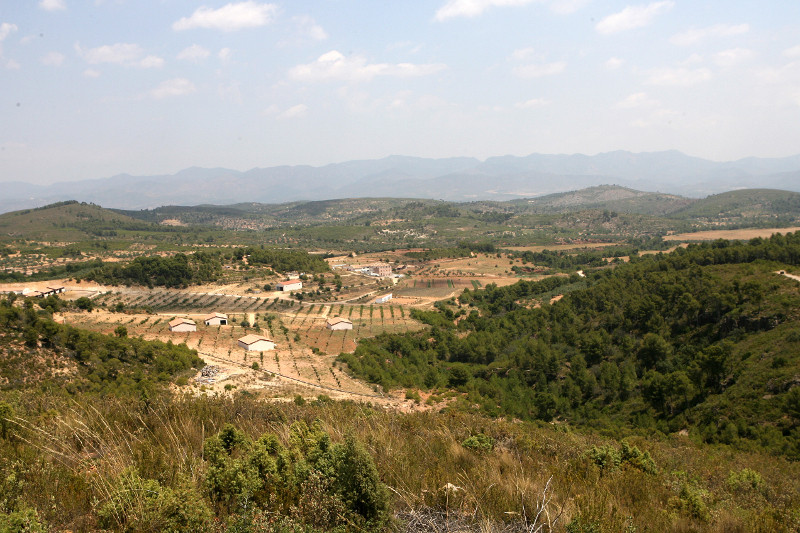 Desarrollo Rural Cultivos forestal (Foto Generalitat valenciana)
